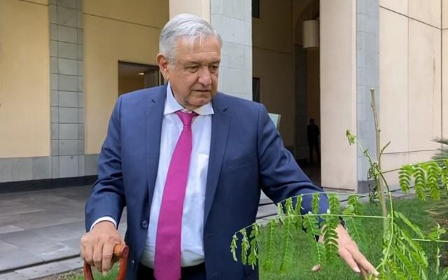 #Video López Obrador siembra árboles tropicales en Palacio Nacional - López Obrador con flamboyán a punto de sembrar en Palacio Nacional. Captura de pantalla