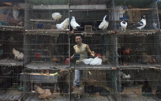 OMS recomienda mejorar mercados y prohibir venta de animales salvajes - Mercados Asia Animales pandemia OMS