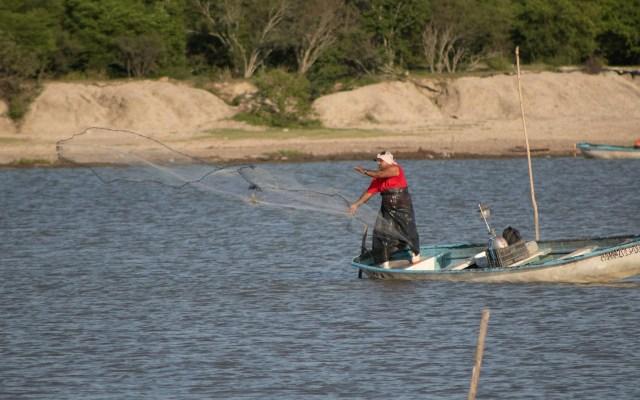 México incumple obligaciones del T-MEC en tema pesquero, revela informe - Captura de camarón en el sistema Lagunar Huizache-Caimanero. Foto de Conapesca