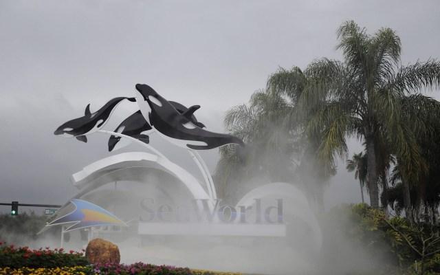 Parques de SeaWorld pierden 56.5 mdd en primer trimestre - Seaworld parque temático