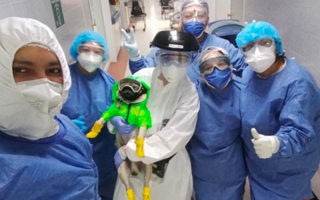 'Harley', el perro que ayuda a personal del ISSSTE a prevenir el estrés - El Centro Médico Nacional 20 de Noviembre, del ISSSTE, implementó una terapia de acompañamiento canino, con el perro Harley.