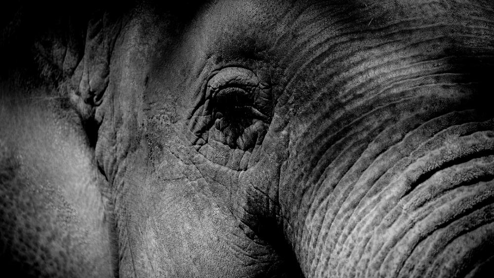 Investigan la muerte de más de 100 elefantes en Botsuana - Foto de Karim MANJRA para Unsplash
