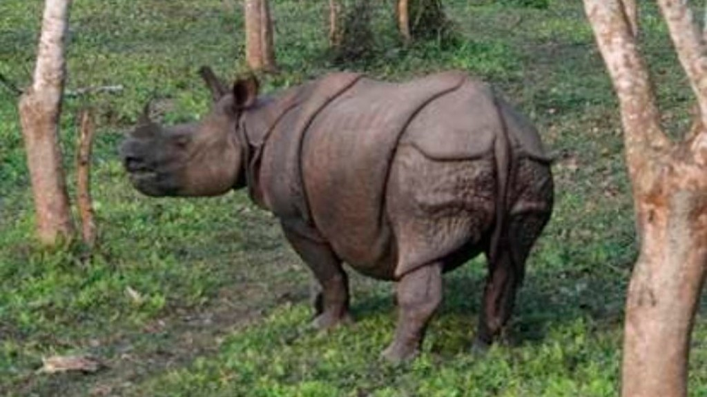 Sexta extinción masiva amenaza a 515 especies de vertebrados: UNAM - extinción masiva vertebrados