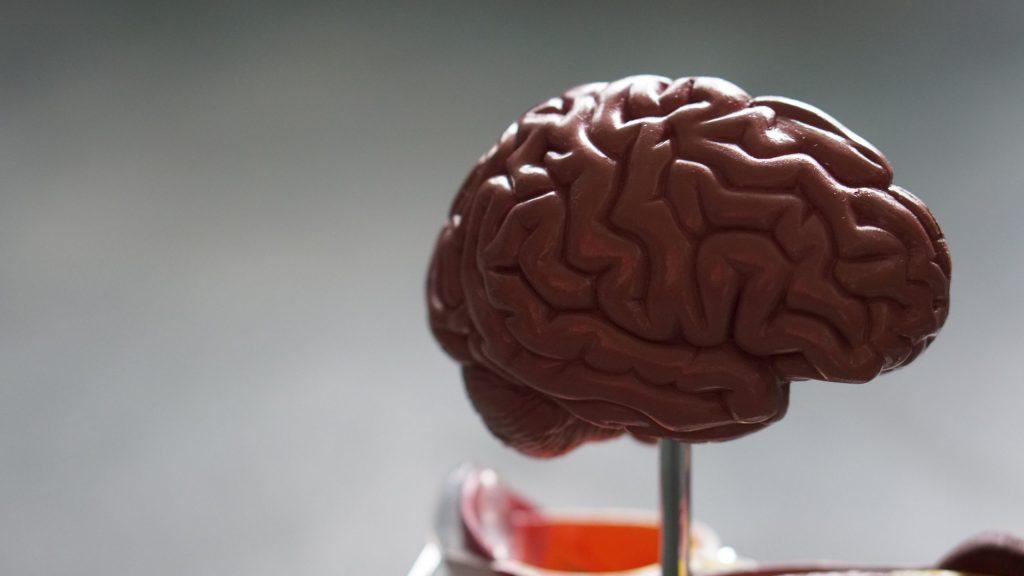 Encuentran una defensa para proteger el cerebro de infecciones - Photo by Robina Weermeijer on Unsplash. (Archivo)
