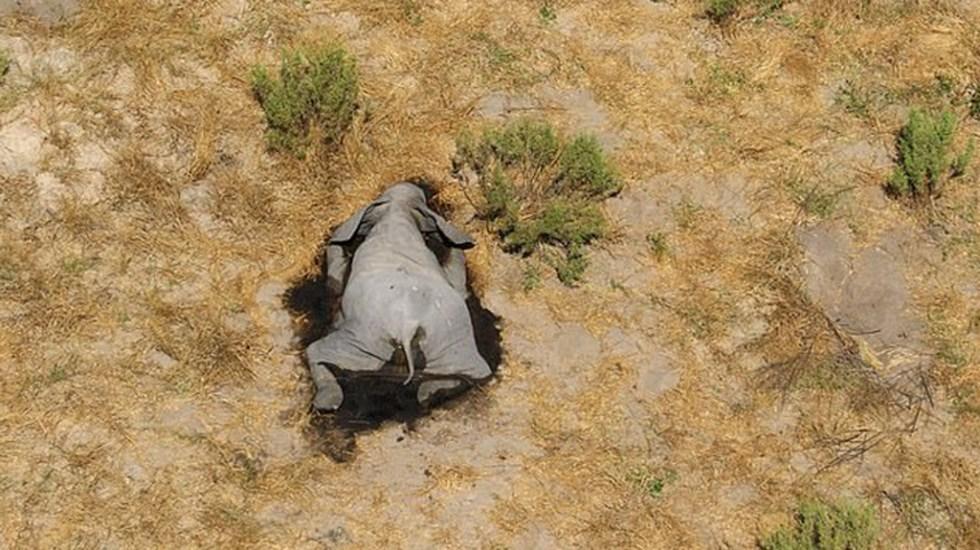 Más de 350 elefantes mueren sin causa aparente en Botsuana - Cadáver de elefante en la zona del Delta del Okavango. Foto de conservacionistas locales
