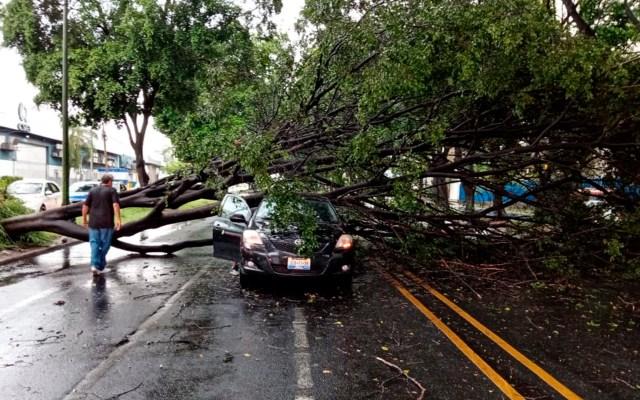 Lluvia en Guadalajara deja árboles caídos y encharcamientos - caídas árboles guadalajara