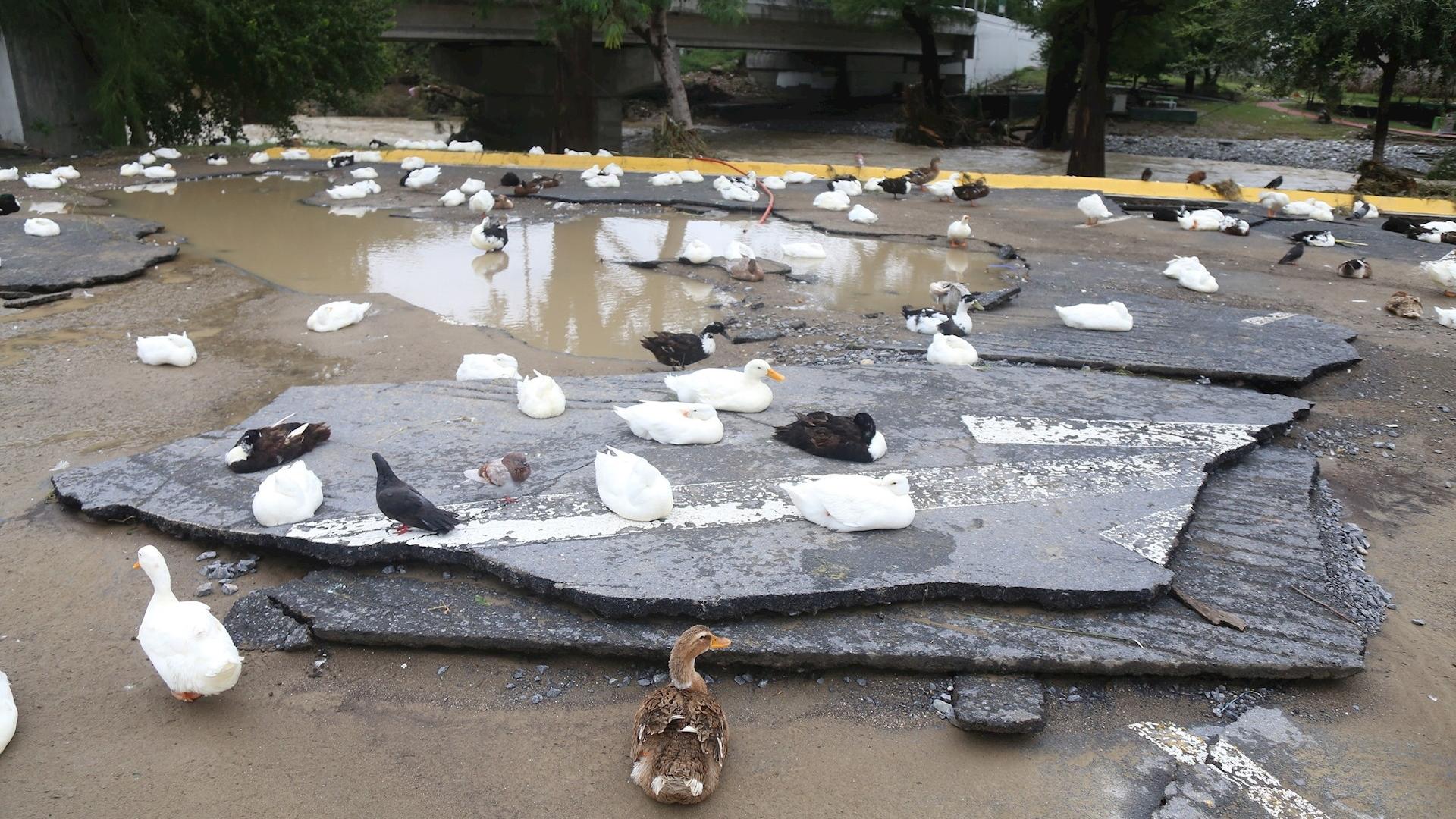 Inundaciones Monterrey Hanna daños afectaciones 2