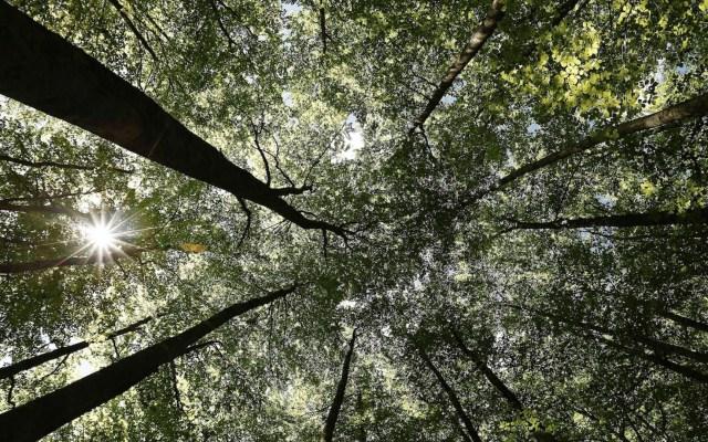 Equilibrio con el medio ambiente, clave para evitar nuevas pandemias, advierte la ONU - Foto de EFE