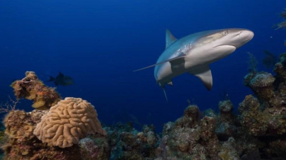 Tiburones están funcionalmente extintos en un 20 por ciento de arrecifes de coral, revela estudio - Foto de Twitter Global FinPrint