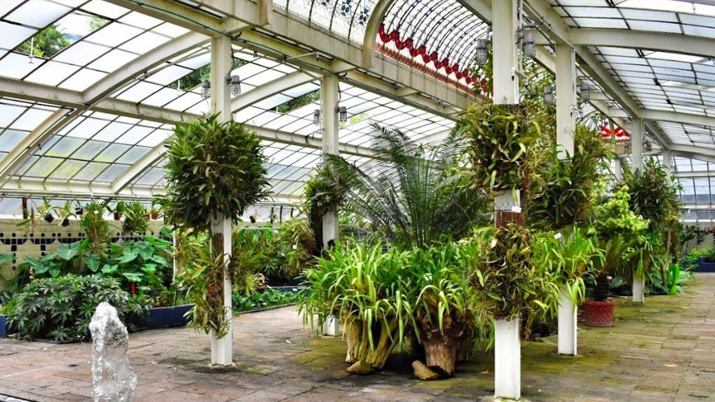 Rechaza Sheinbaum que se vaya a destruir el Jardín Botánico de Chapultepec - Jardín Botánico Chapultepec