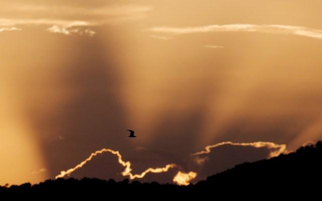 La Marjal del Moro - Un ave sobrevuela al atardecer la Marjal del Moro, un humedal catalogado como espacio protegido ZEPA, Zonas de especial protección para las aves. Foto dude EFE/Kai Försterling