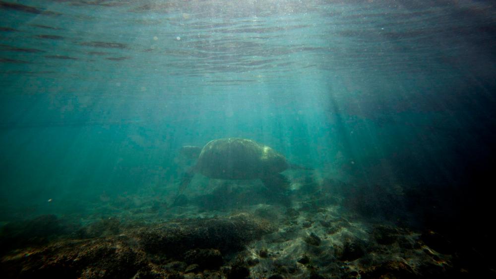 Más de la mitad de los océanos, afectados por el cambio climático - Foto de EFE