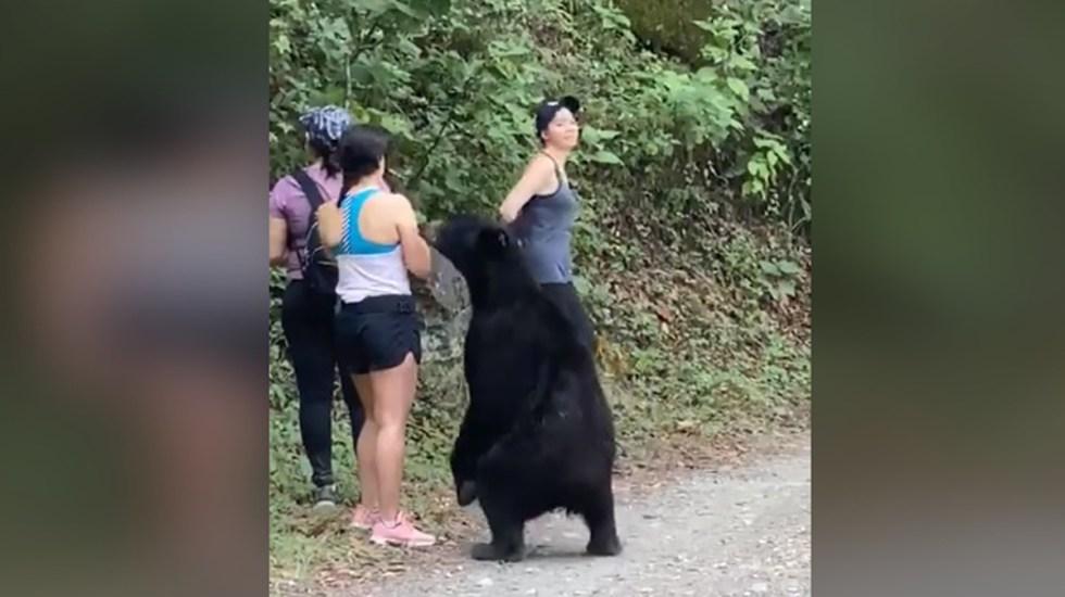Capturan al oso de Chipinque; lo castran antes de su liberación - Oso negro se acerca a mujeres en Parque Chipinque de Nuevo León. Captura de pantalla