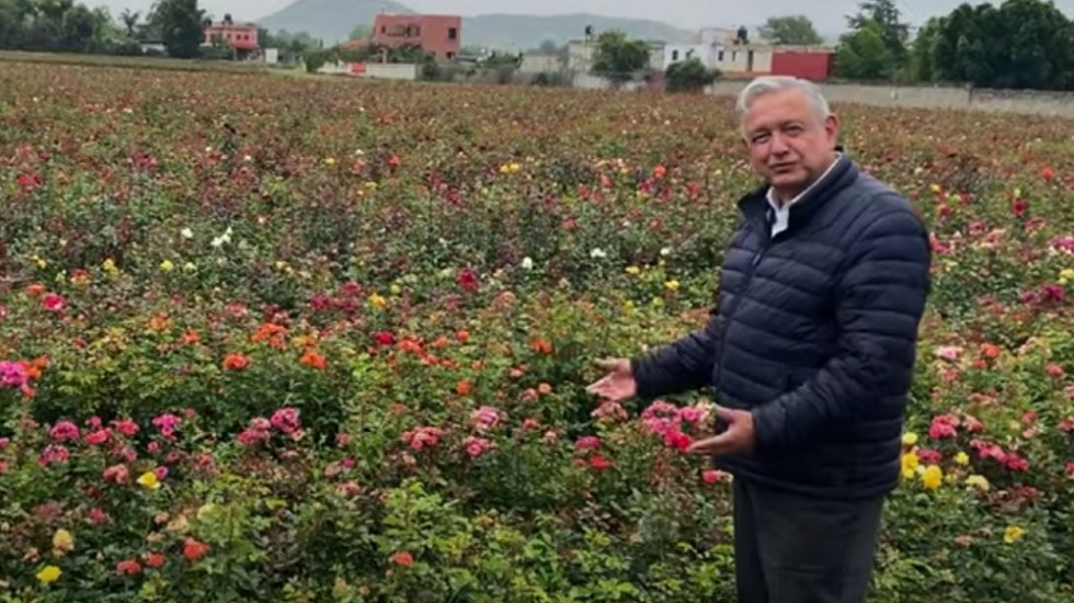 Esto es México, esto es la vida, asegura AMLO al mostrar un rosal en Puebla - Foto de captura de pantalla