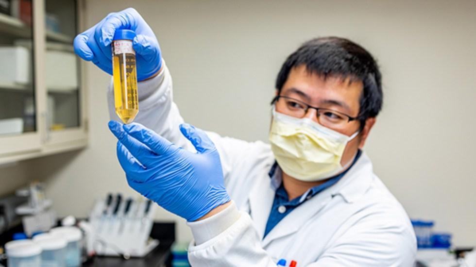 Científicos encuentran anticuerpo que neutraliza y previene el virus del COVID-19 - Foto de University of Pittsburgh