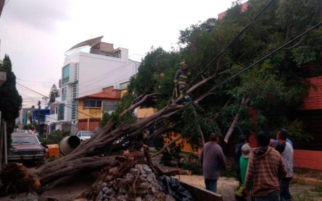 Cae árbol en la Gustavo A. Madero, afecta cableado de baja tensión - En Avenida Ricarte y Boyacá de la colonia Valle del Tepeyac en la GAM, cayó un árbol, bombertos trabajan para retirarlo. Foto Twitter @SGIRPC_CDMX