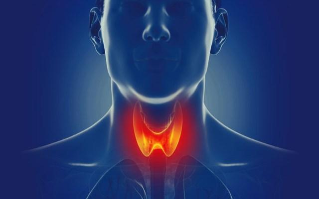 La tiroides, glándula vital para el metabolismo general: IMSS - Foto de Institutos Nacionales de la Salud (NIH) de los Estados Unidos