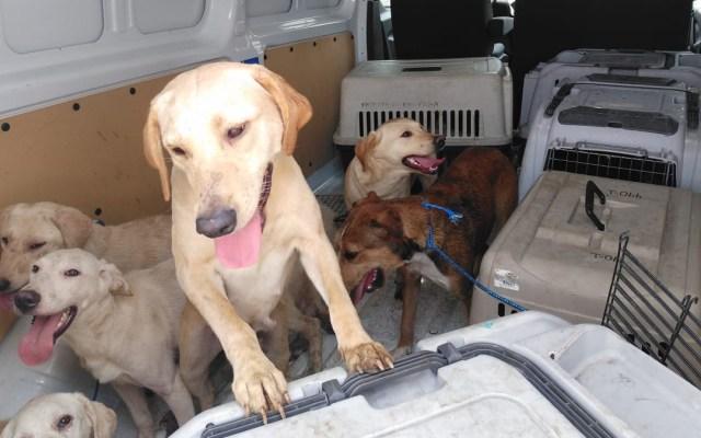 Rescatan en la alcaldía Cuauhtémoc a 27 perros que sufrían maltrato - Perros rescatados en la colonia Peralvillo de la Ciudad de México. Foto de @PAOTmx