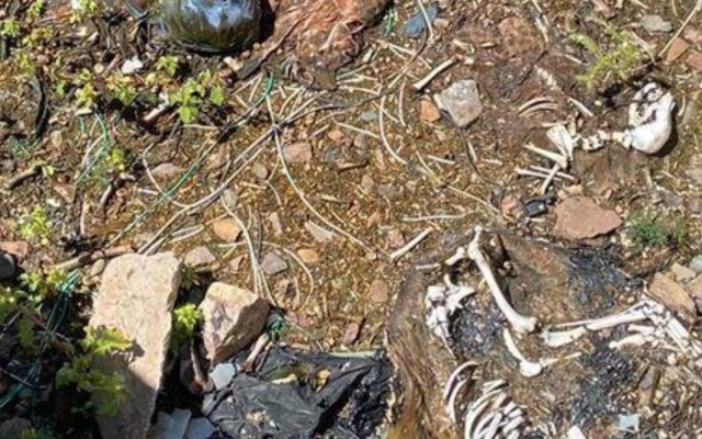 Encuentran restos de perros con huellas de tortura en Guanajuato - Foto de Telediario Bajío