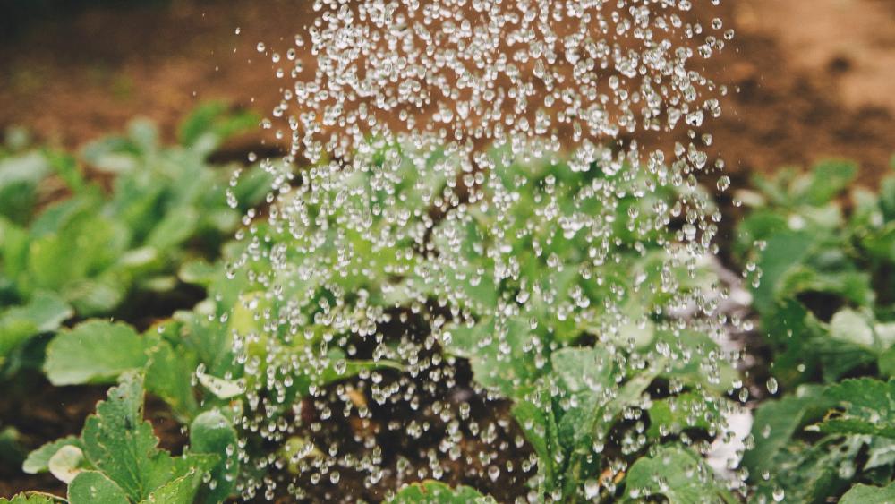 Pago de agua a EE.UU. pone en riesgo a 70 mil familias de productores en Tamaulipas. Noticias en tiempo real
