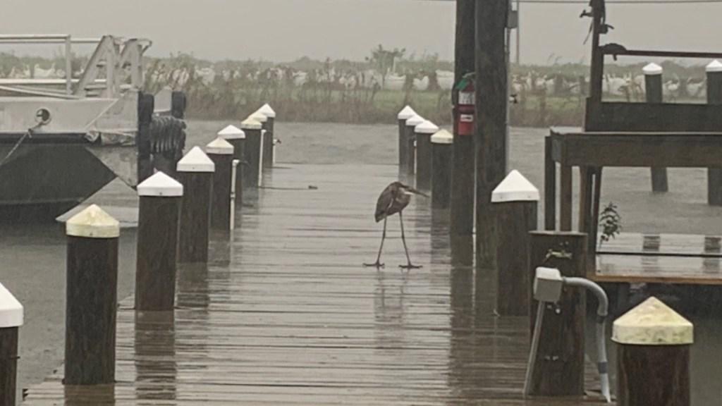 #Video Zeta toca tierra en el sureste de Luisiana como huracán Categoría 2 - Foto de @DCMonteverde