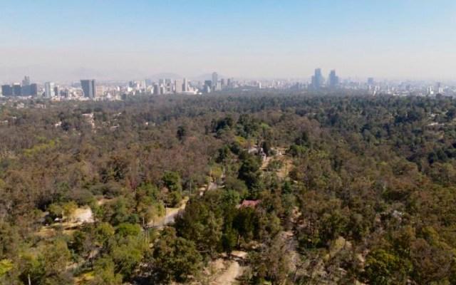 Niega Claudia Sheinbaum que se vaya a privatizar el Bosque de Chapultepec - Foto Twitter @Claudiashein