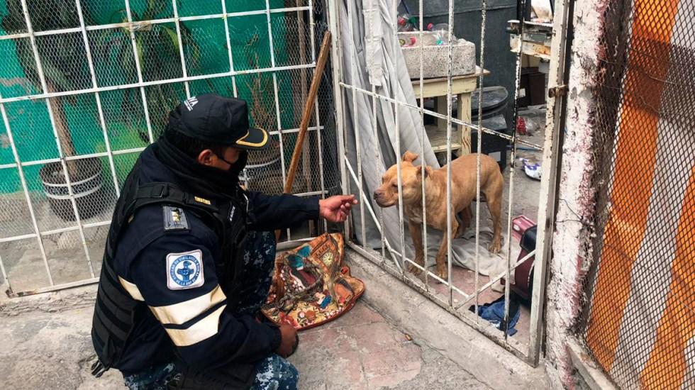 Rescatan de vecindad a perro abandonado tras asesinato de niños mazahuas - Perro que quedó abandonado tras asesinato de niños mazahuas en CDMX. Foto de SSC-CDMX