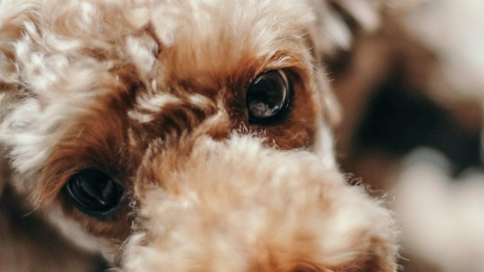 Le regalan comida a adulto mayor para sus mascotas, pero resultó envenenada; hay 17 perros muertos - Foto de insung yoon para Unsplash
