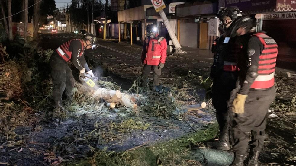 Fuertes vientos derriban 27 árboles en CDMX - Árbol caído en la alcaldía Coyoacán. Foto de @Rescate_Condor