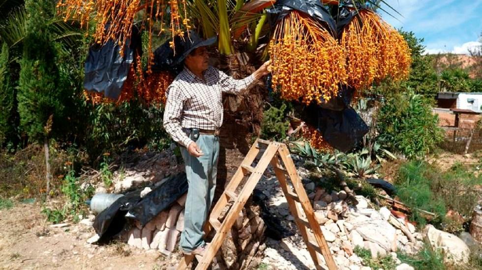 """Campesinos rescatan """"paraíso mixteco"""" en Oaxaca; la tierra se encontraba erosionada - Campesinos rescatan zona erosionada en el sur de México; ahora es un"""