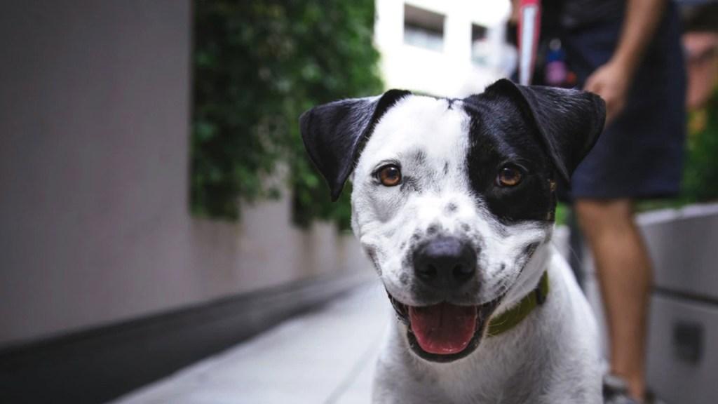 Es improbable que mascotas transmitan el COVID-19 a humanos, asegura López-Gatell - Foto de Justin Veenema @justinveenema