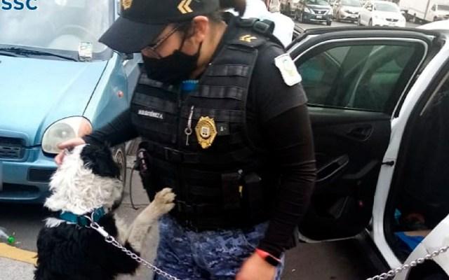 Policías rescatan a perro encerrado en vehículo en laMiguel Hidalgo - Policías de la SSC rescatan a perro que dueño dejó dentro de vehículo en la alcaldía Miguel Hidalgo. Foto Twitter @SSC_CDMX