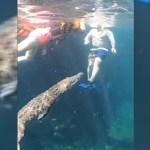 #Video Cocodrilo nada entre turistas en cenote de Tulum