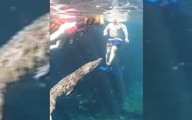 #Video Cocodrilo nada entre turistas en cenote de Tulum - Cocodrilo Panchito con turistas en cenote de Tulum. Captura de pantalla
