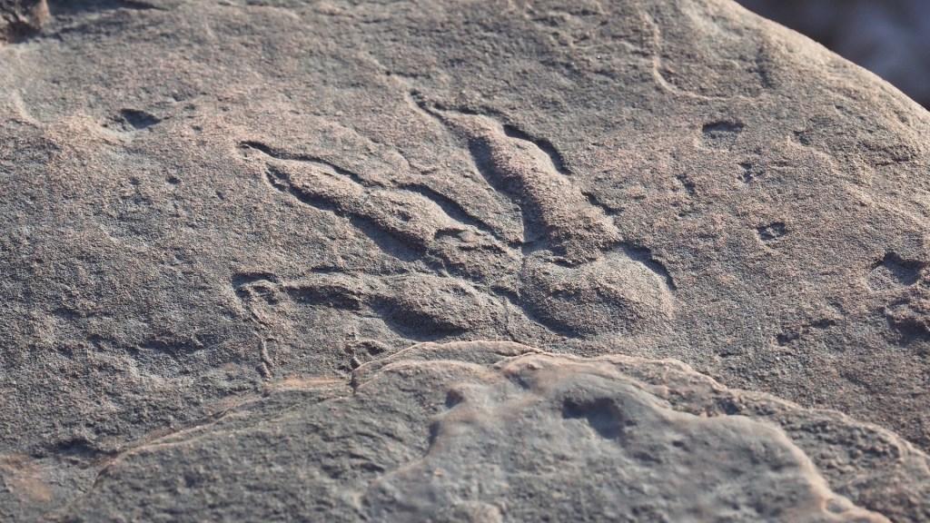 Niña de 4 años descubre en playa milenaria huella de dinosaurio - Huella de dinosaurio descubierta en Gales. Foto de EFE