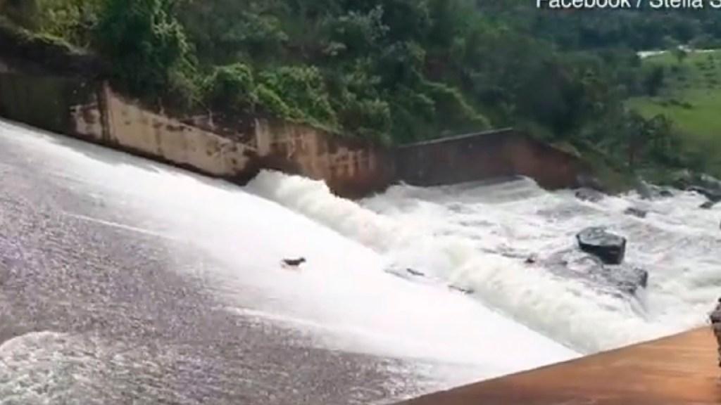 #Video Hombre arriesga su vida para salvar a perro arrastrado por el agua - Jardinero arriesga su vida para salvar a un perro arrastrado por las aguas de una presa en Sudáfrica. Foto Captura de pantalla
