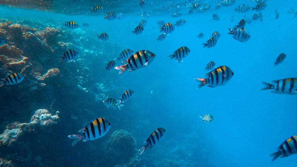 Ruido provocado por el ser humano altera la vida en los océanos - Foto de Francesco Ungaro para Unsplash