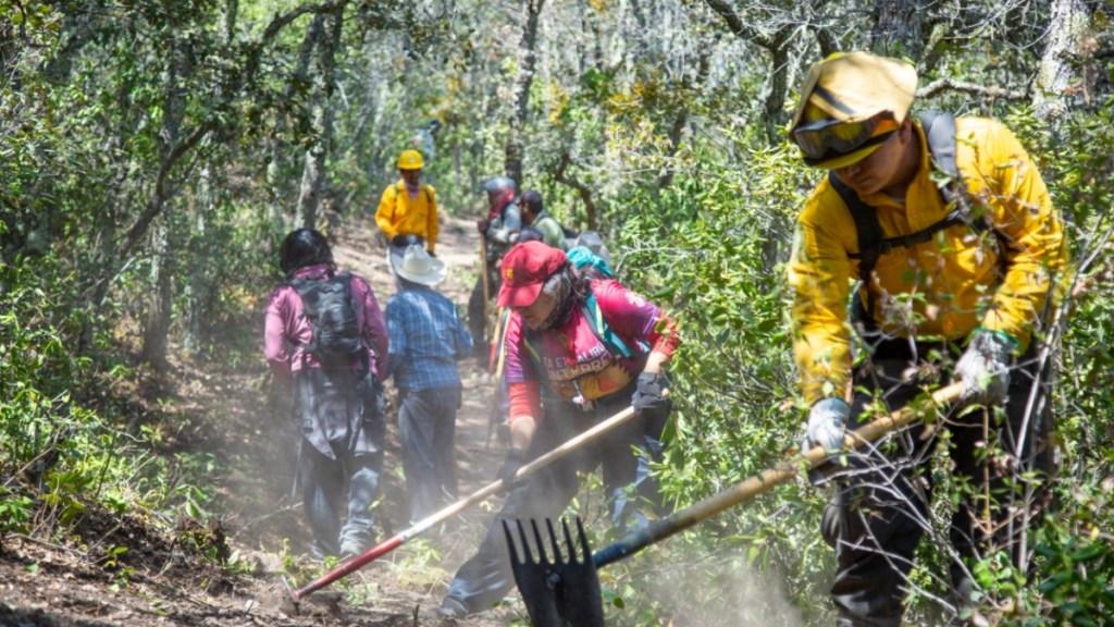 En México hay 77 incendios forestales activos en 23 estados: Conafor - Incendios forestales México