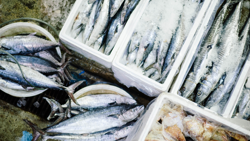 Engaños en la venta de pescado afectan a consumidores en México, alerta ONG - Foto de CHUTTERSNAP para Unsplash
