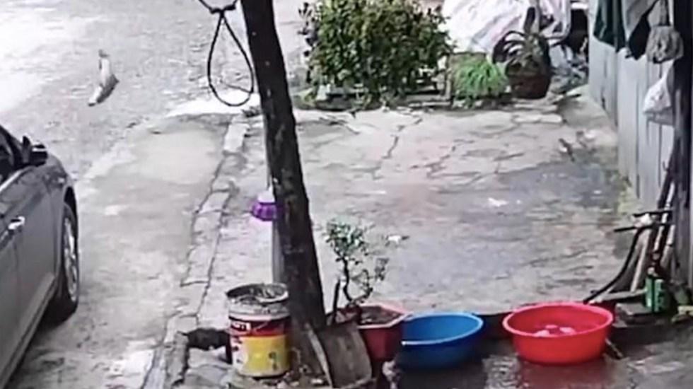#Viral Pez escapa de una tina con agua hacia el drenaje - Un pez escapa de una tina con agua en Vietnam. Foto tomada de video