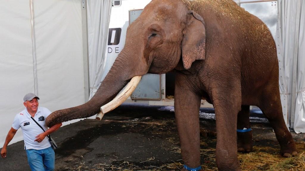 Rescatan a Big Boy, un elefante de 40 años abandonado por un circo en Guadalajara - El elefante Big Boy fue trasladado al zoológico de Culiacán. Foto de EFE