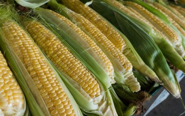 Tribunal revoca amparo concedido a Monsanto por uso de glifosato en México - Maíz agricultura plantación plantas 2