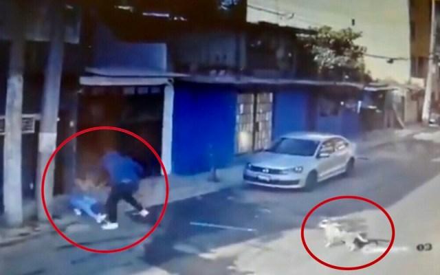 #Video Perro defiende a mujer en Tlalpan de intento de feminicidio - Perro defiende a mujer de tentativa de feminicidio en Tlalpan. Captura de pantalla