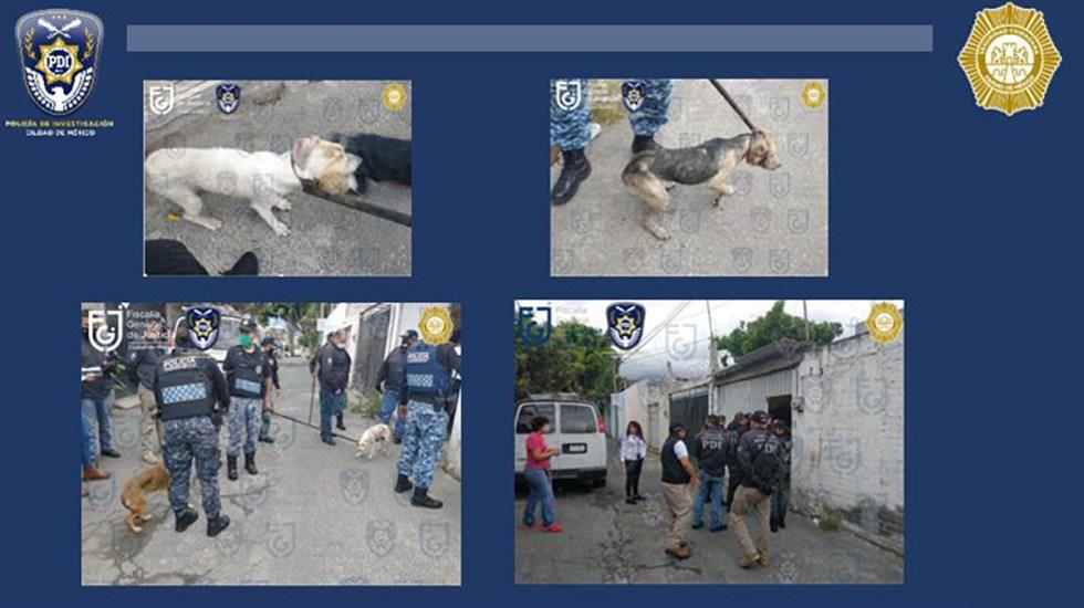 Rescatan a siete perros en Xochimilco que sufrían maltrato animal - Rescate de perros en Xochimilco. Foto de @FiscaliaCDMX