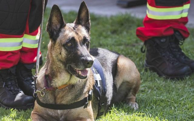 Certifican a binomios de la Unidad Canina de Rescate de la UNAM