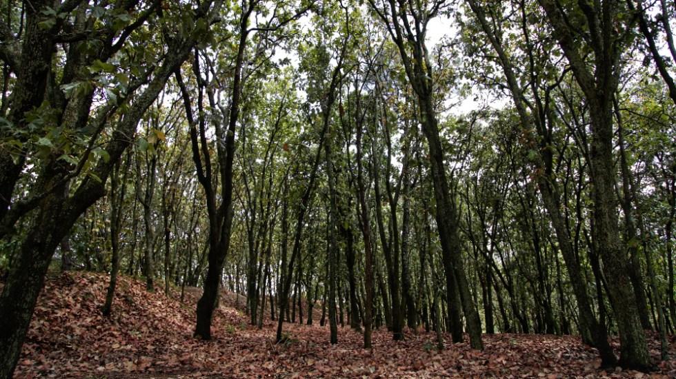 Frena INDEP subasta de lote en Bosque La Primavera tras reclamo de Alfaro - Bosque La Primavera Jalisco