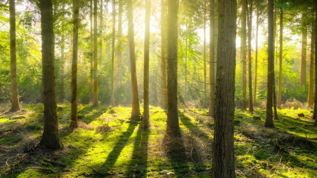 """Los 7 """"puntos de retorno"""" para salvar el planeta - Bosque. Foto de @UNclimatechange"""