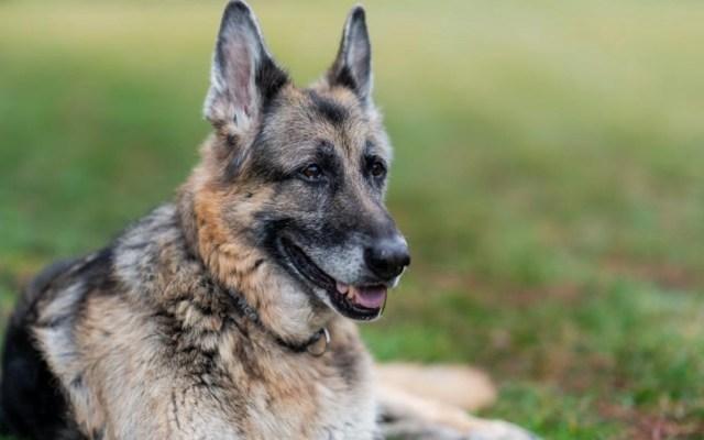 El presidente de Estados Unidos, Joe Biden confirmó la muerte de Champ, uno de sus perros - Foto de Twitter @POTUS