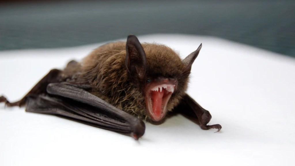 Alertan por presencia de murciélago con rabia en San Diego - Alertan por presencia de murciélago con rabia en San Diego. Foto de Todd Cravens para Unsplash