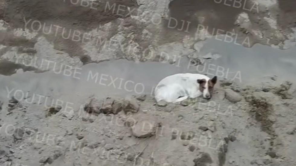 #Video Otro perro cayó al socavón gigante en Puebla